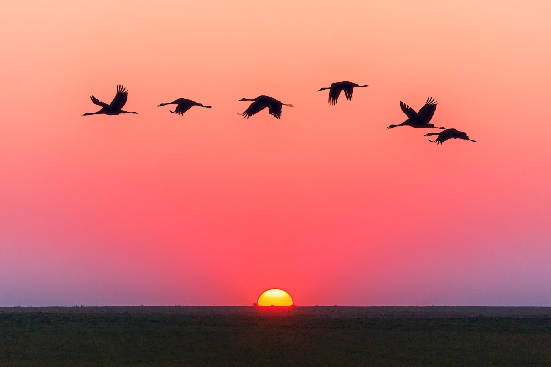 Saskatchewan Flyway Hunting